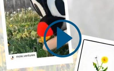 Video: Maulfwurf von Maria Well